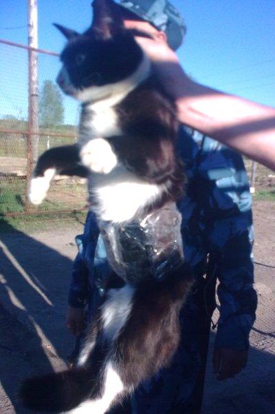 Российская полиция задержала кошку - контрабандистку
