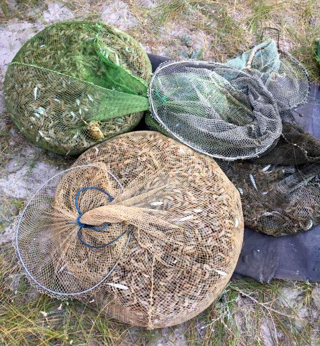 Под Очаковом браконьеры выловили крабов и креветок на 5 млн грн