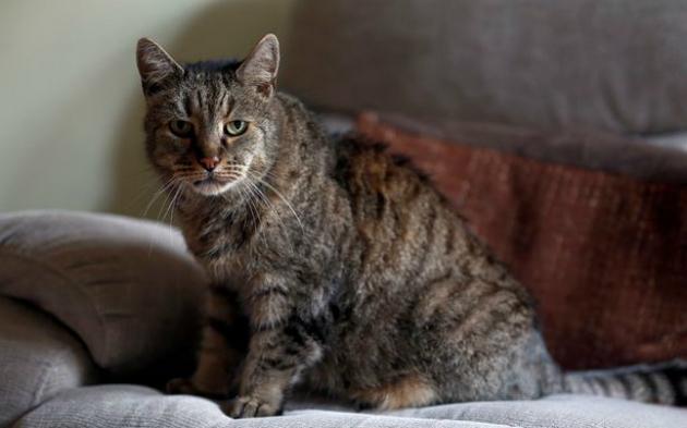 В Великобритании умер самый старый на планете кот: фото