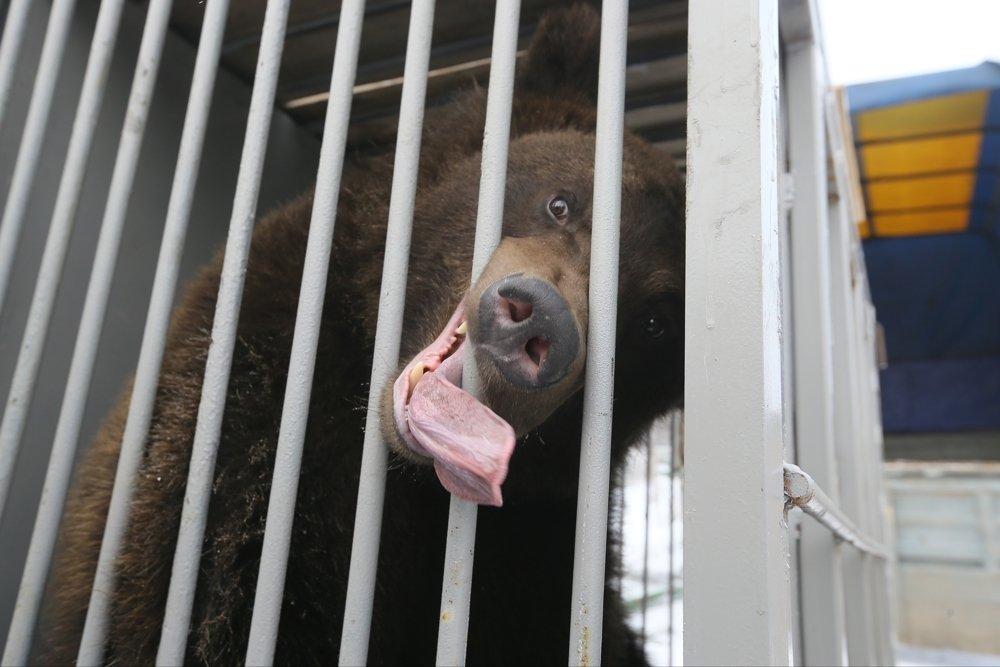 В Москве голодный медведь отобрал у мальчика бутерброд с сыром