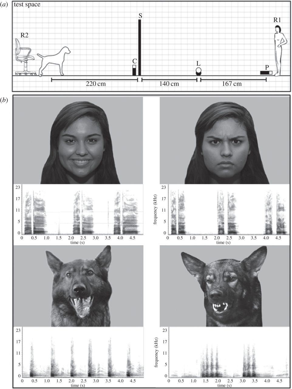 Ученые: собаки определяют настроение человека по выражению лица