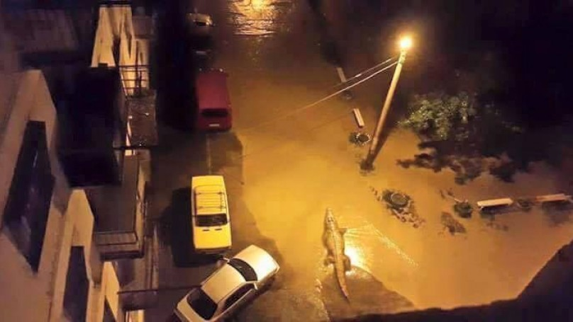 Сбежавший из зоопарка крокодил на улице Тбилиси