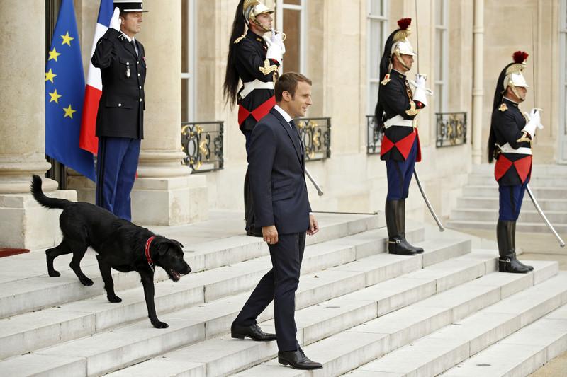 Макрон с женой взяли из приюта собаку: фото