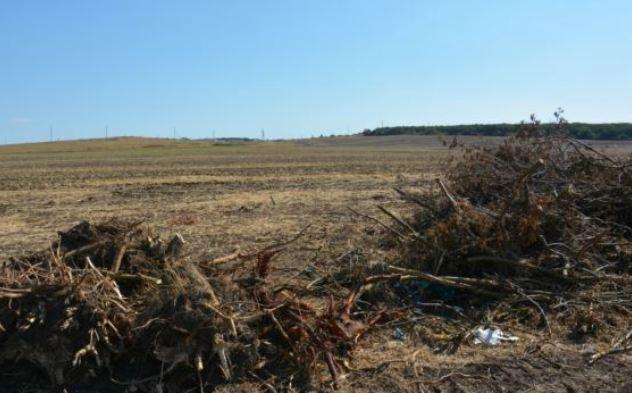 В Крыму из-за строительства автомагистрали уничтожают лесополосы