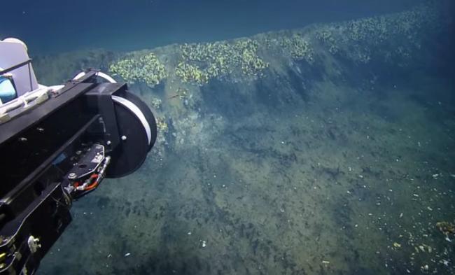 В Мексиканском заливе ученые обнаружили смертоносное озеро