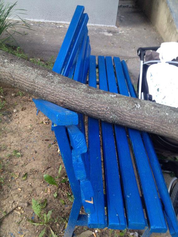 В Харькове на женщину и ее семимесячного ребенка упало дерево
