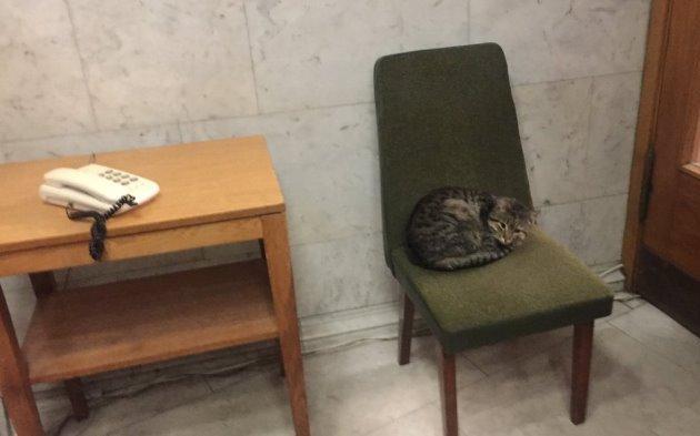 МИД взял на работу кота: фото