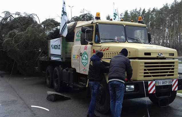 В Киев привезли главную елку страны: фото