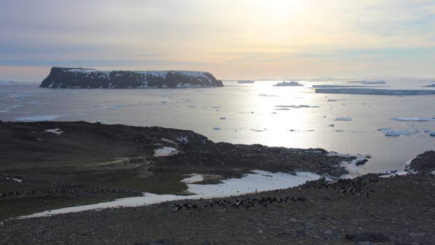 Из космоса обнаружена ранее неизвестная большая колония пингвинов