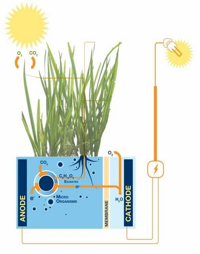 cfc3f17559-Gras_Plant-MFC.jpg-for-web-large.jpg