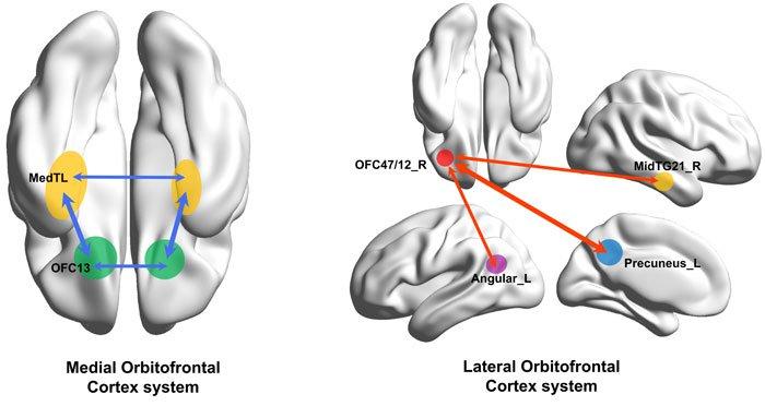 Ученые определили источник чувства депрессии в мозге