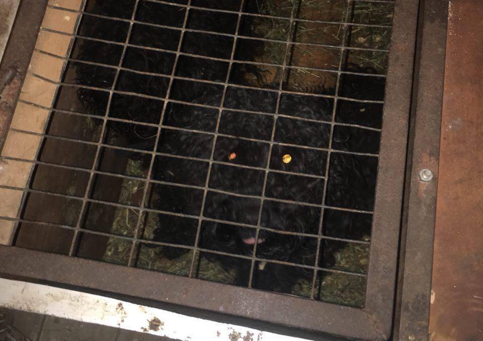 Женщина пыталась вывезти в Донецк 8 собак, енота и макаку: фото