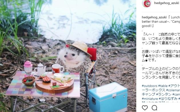 Японский ежик Азуки ушел в поход и покорил соцсети: фото